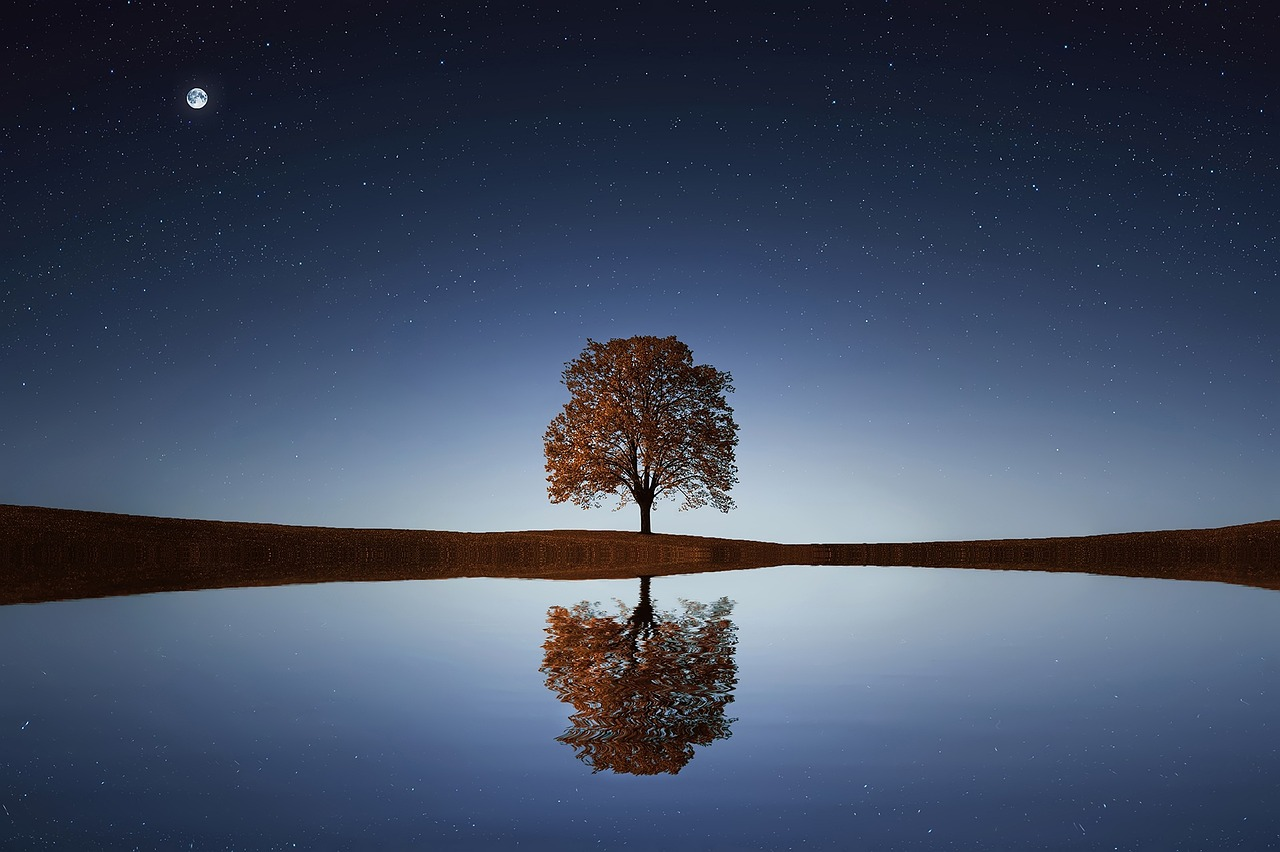 image of a lone tree reflecting on a large body of water at night